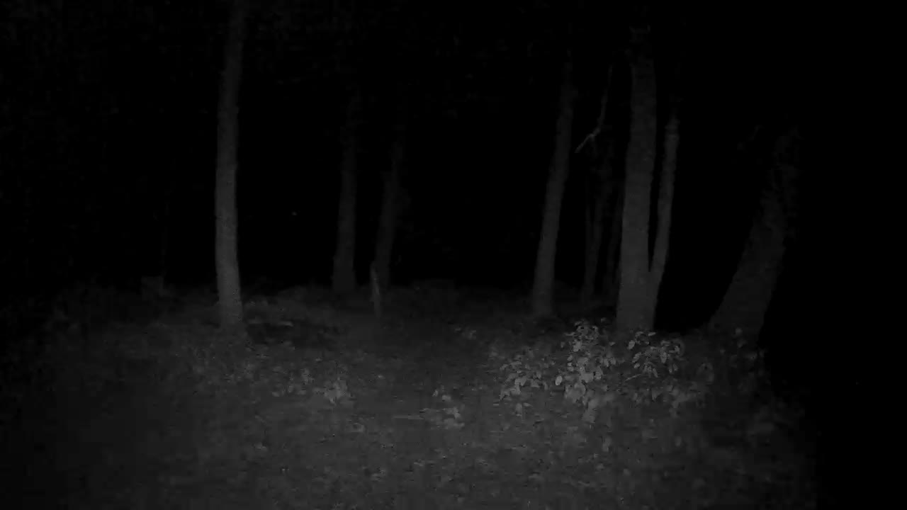 Night Vision Range Netgear Communities
