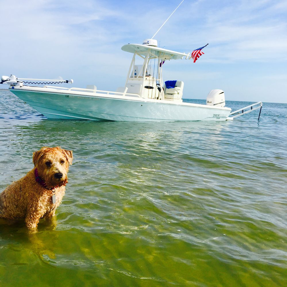 Murphy on the water