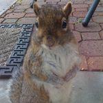 RocketSquirrel